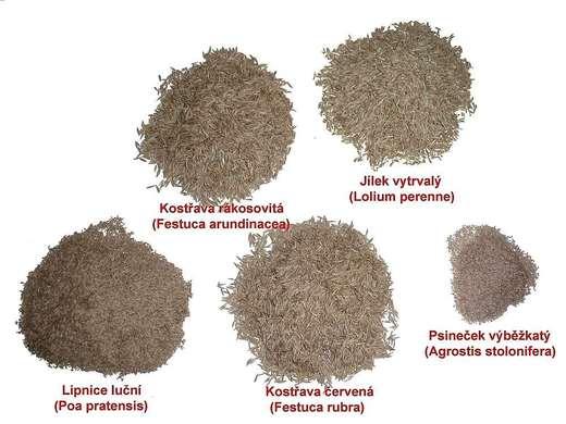 Travní odrůdy - porovnání velikostí